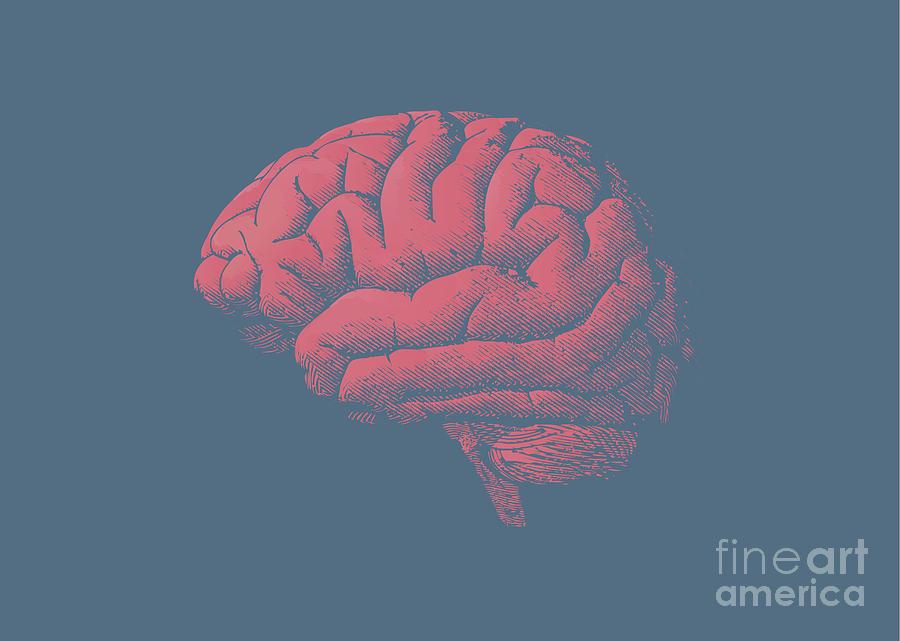 45 Digital Art - Engraving Brain Illustration With Tint by Jolygon