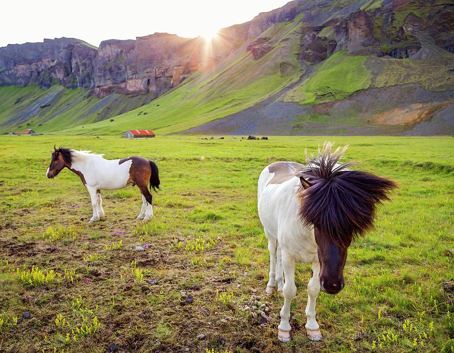 Horse Photograph - Enjoying the sunset by Mercedes Noriega
