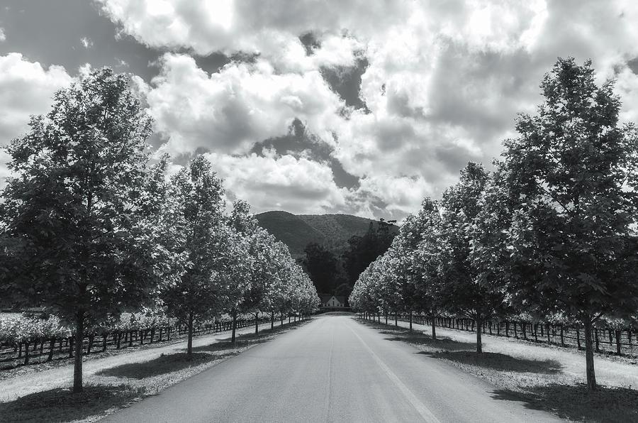 entrance road bw by Jonathan Nguyen