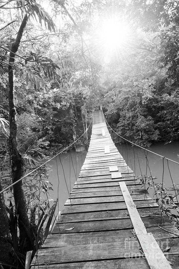 Epic Bridge Over Jungle River Black and White by Tim Hester