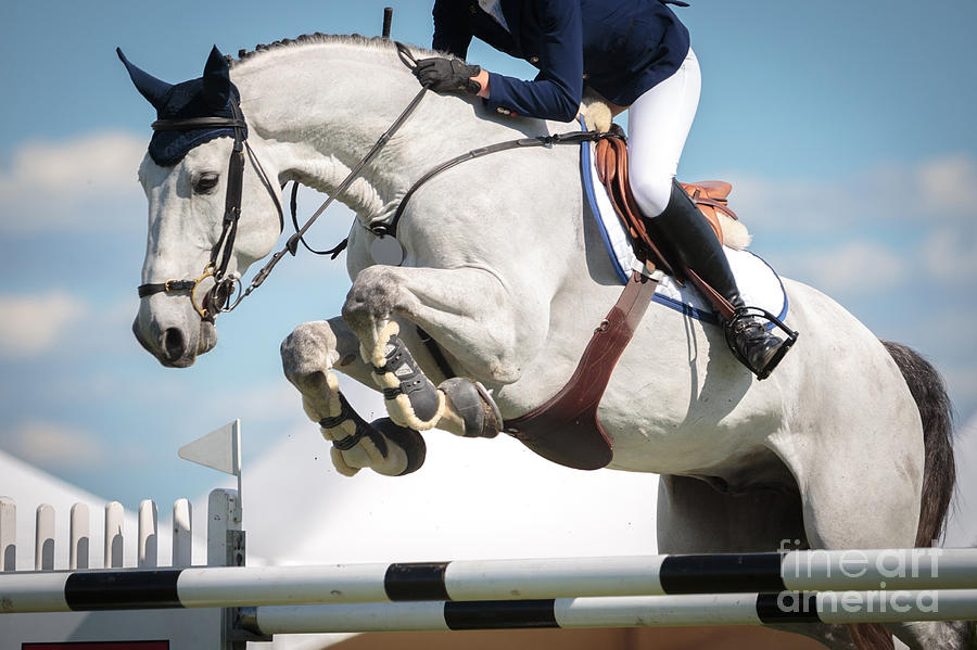Equestrian Photograph - Equestrian Sports, Horse Jumping, Show by Catwalkphotos