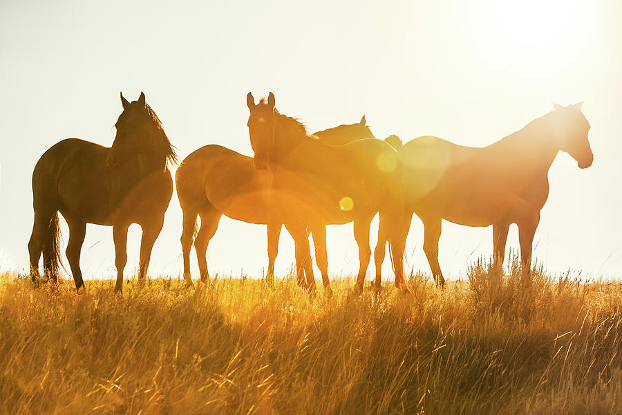 Equine Glow by Todd Klassy