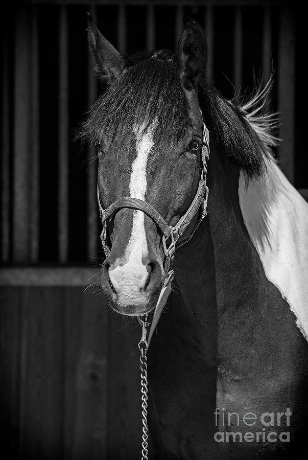 Equine Noir by Nina Stavlund