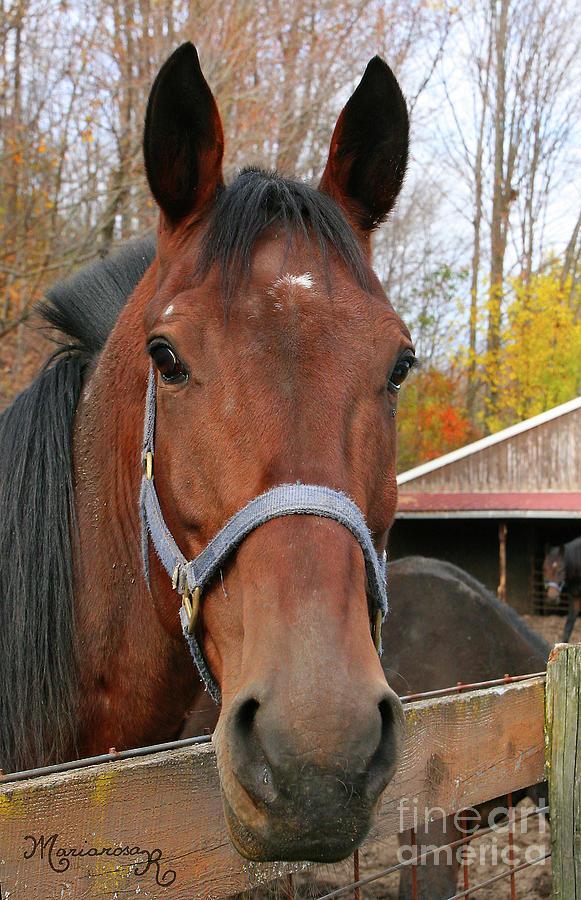 Equine Portrait by Mariarosa Rockefeller