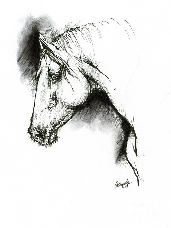 Equine sketch 2019 04 28 b by Angel Ciesniarska