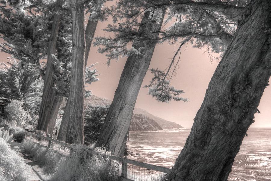 Esalen Big Sur Cypress trees by Jane Linders