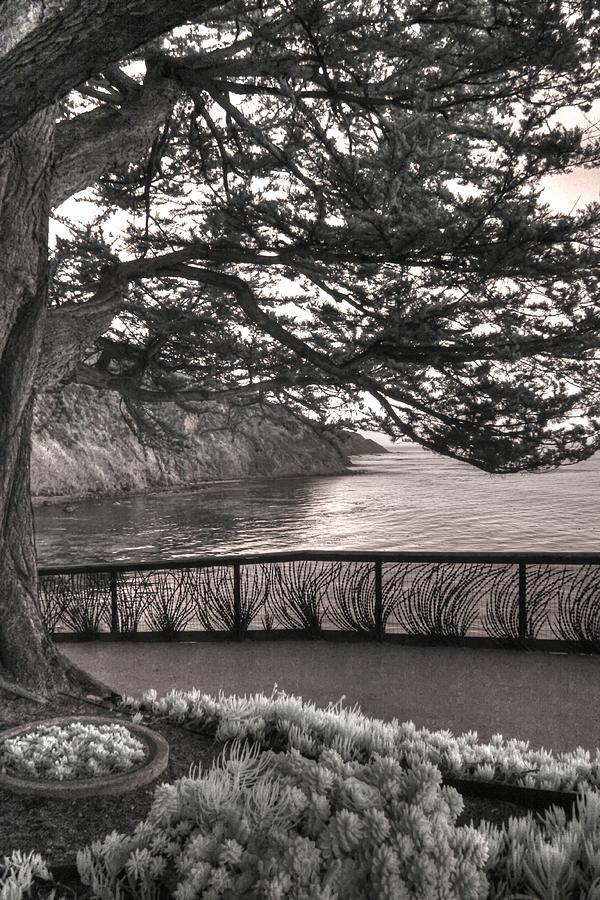 Esalen Institute Big Sur Infrared Landscape succulents by Jane Linders