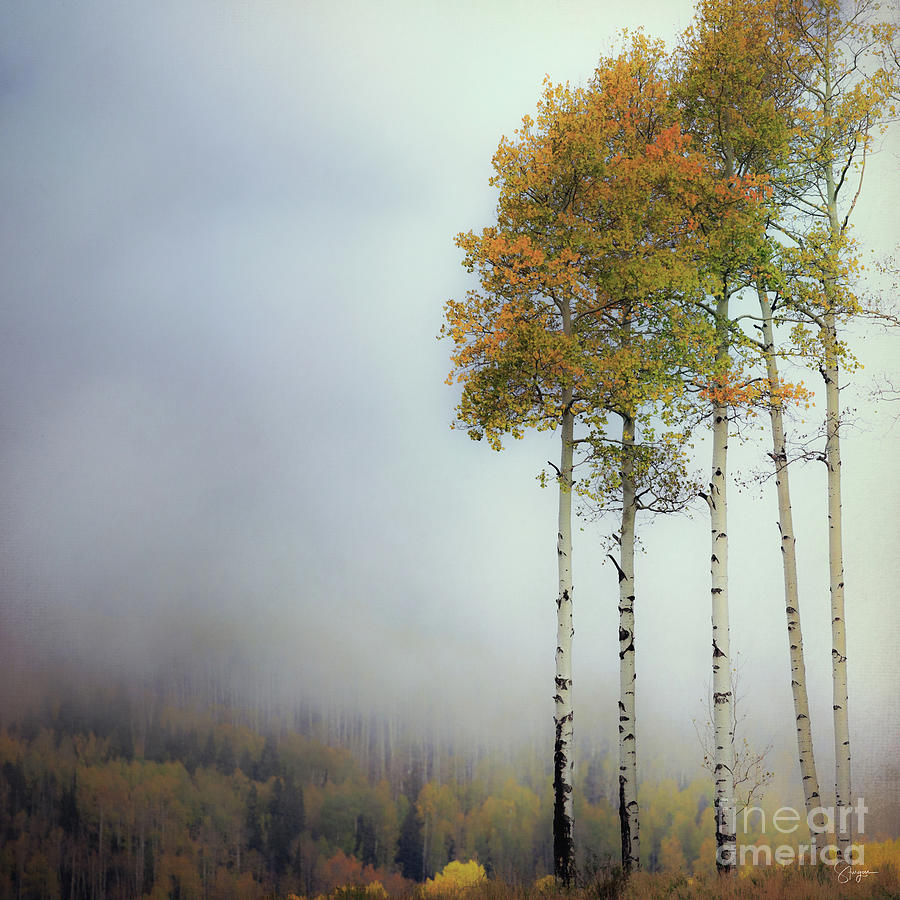 ETHEREAL AUTUMN by Doug Sturgess