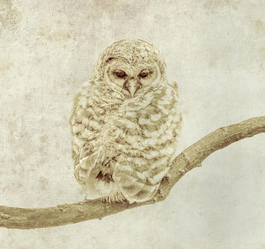 Ethereal Owl by Dan Sproul