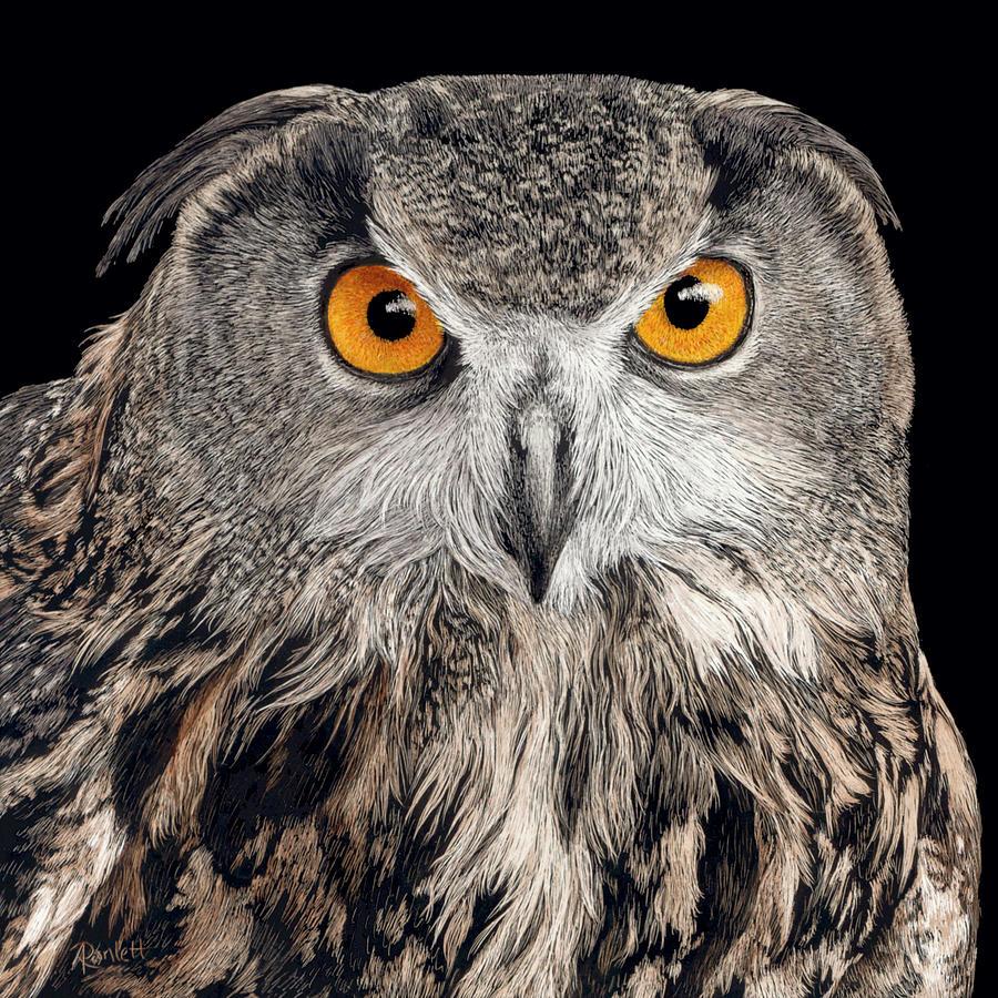 Eurasian Eagle Owl by Ann Ranlett