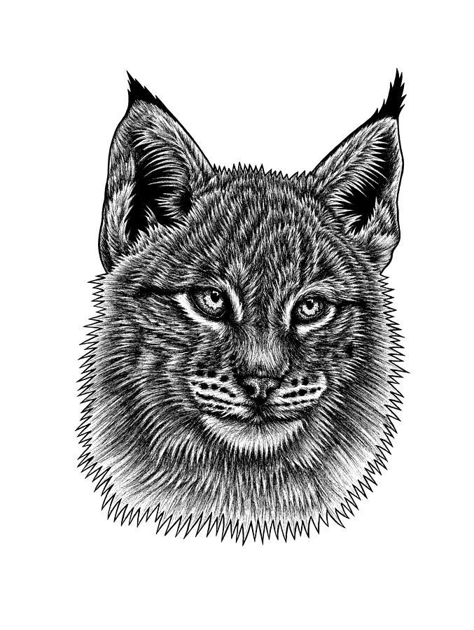 Lynx Drawing - Eurasian Lynx Kitten by Loren Dowding