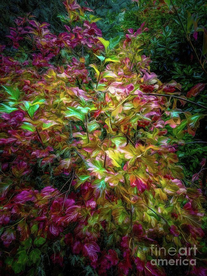 European Cranberry Bush by Jon Burch Photography