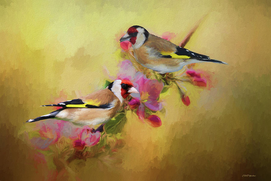 European Goldfinch - Painting by Ericamaxine Price