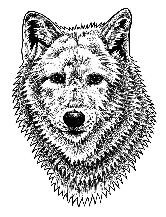 European Wolf - Ink Illustration Drawing by Loren Dowding