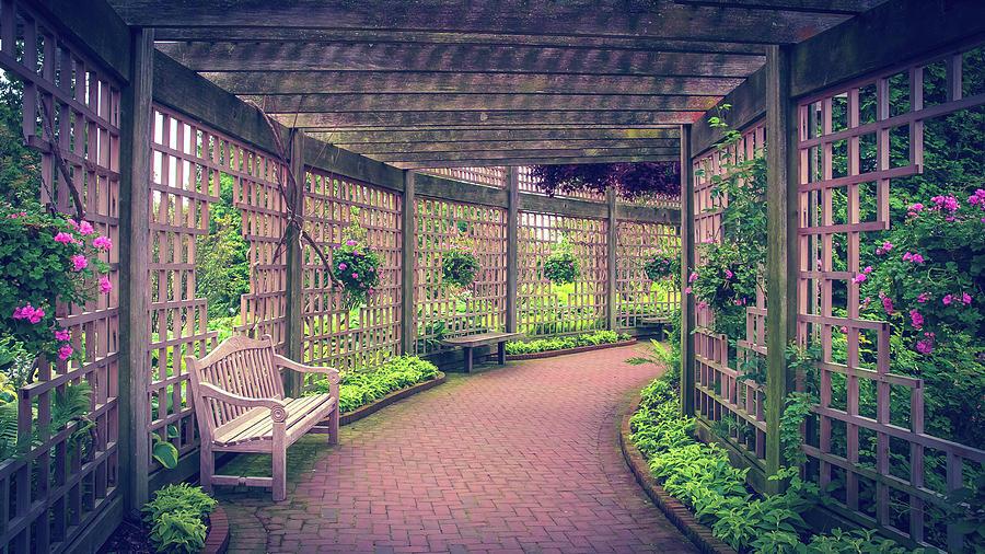 Evening Garden by Julie Palencia