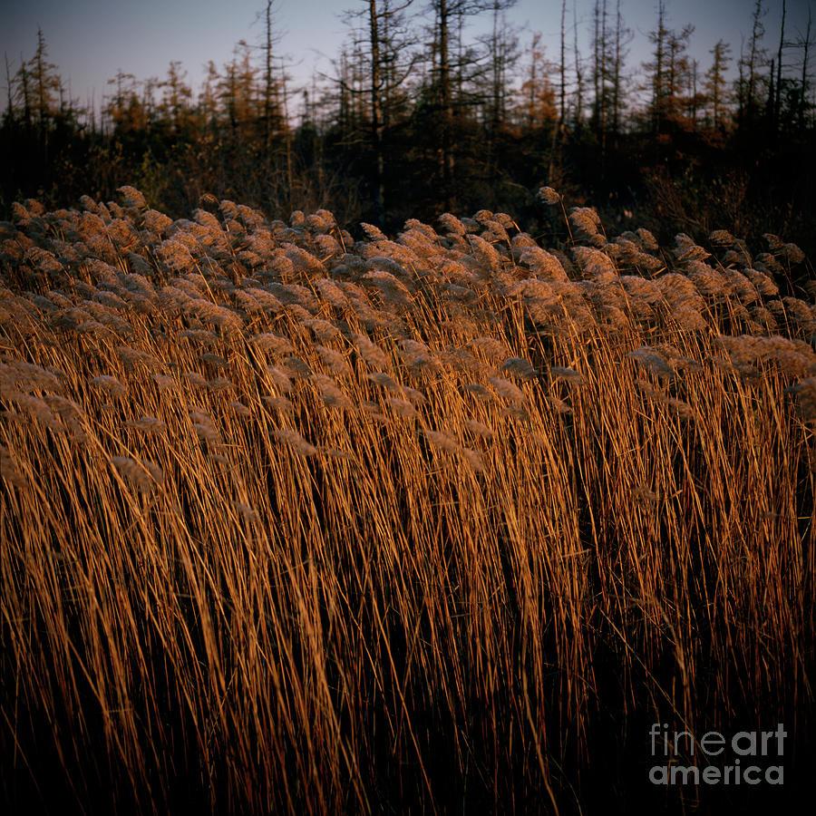 Evening Light by RicharD Murphy