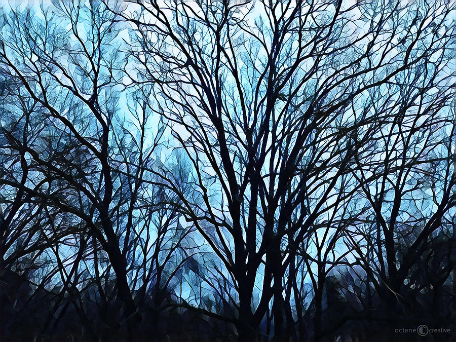 Evening Trees 0423 by Tim Nyberg