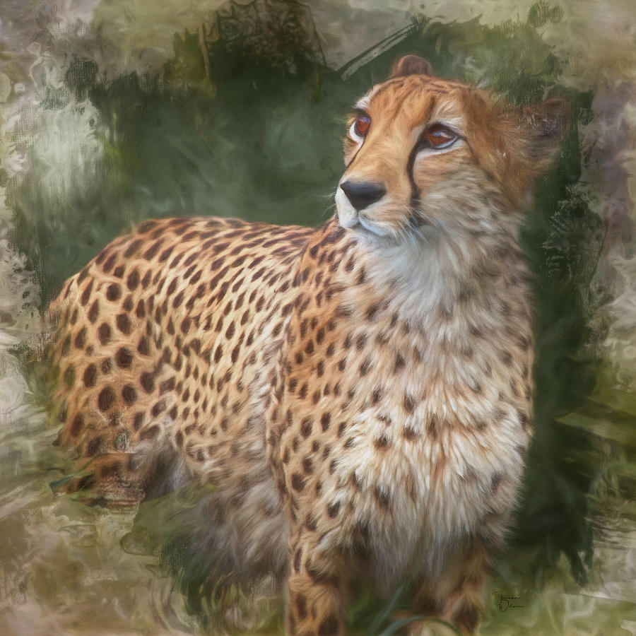 Ever Watchful Cheetah by TL Wilson Photography by Teresa Wilson