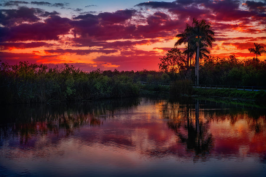 Everglade Sunrise by Michael Ash