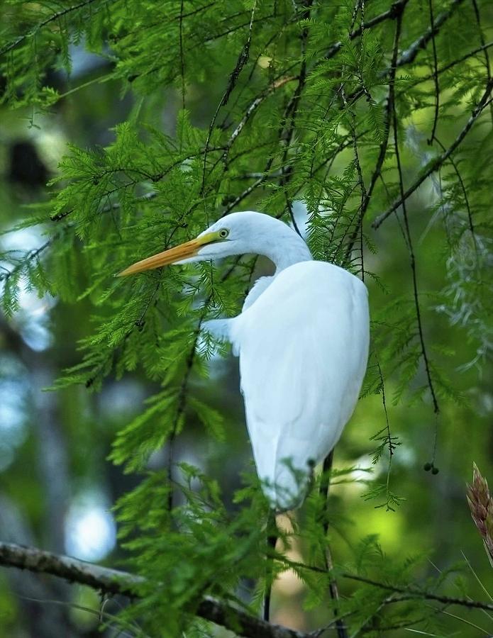 Everglades Stalker by John Bates