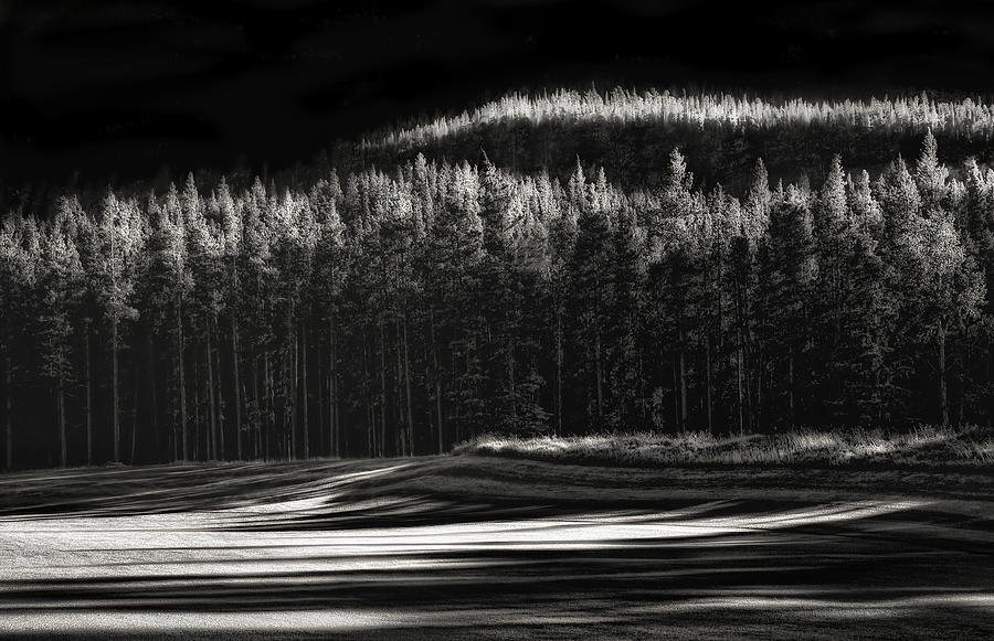 Trees Photograph - Evergreen Mood by Yvette Depaepe