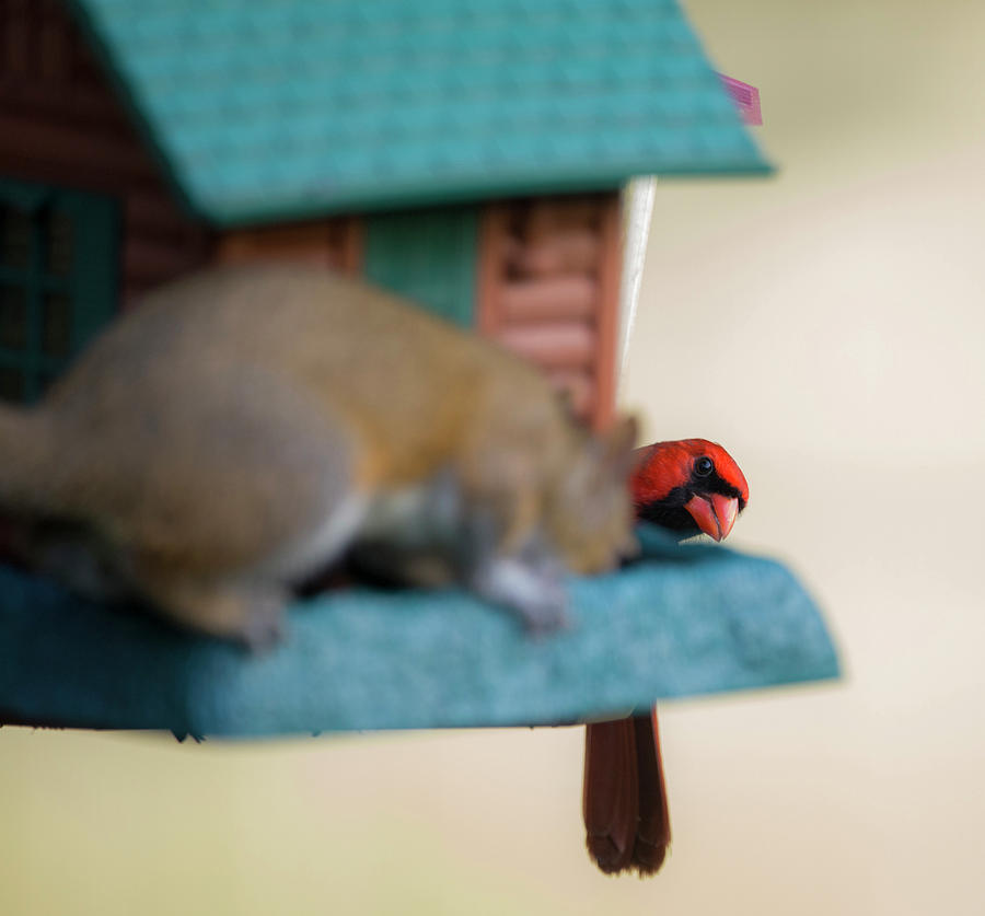 Excuse me, That's a bird feeder  by Kevin Banker