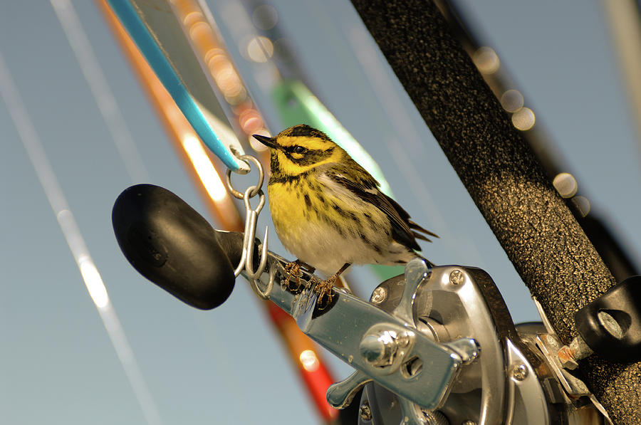 Exhausted bird lands on reels by David Shuler