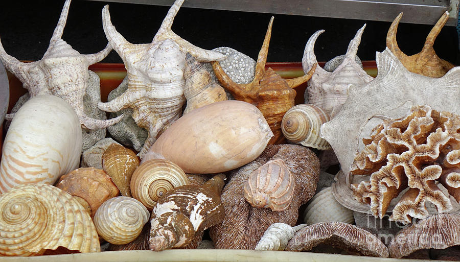 Exotic Sea Shells for Sale by Yali Shi