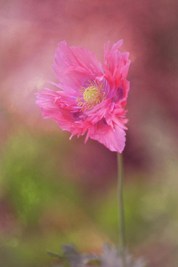 Flower Photograph - Exquisite Appeal by Dale Kincaid