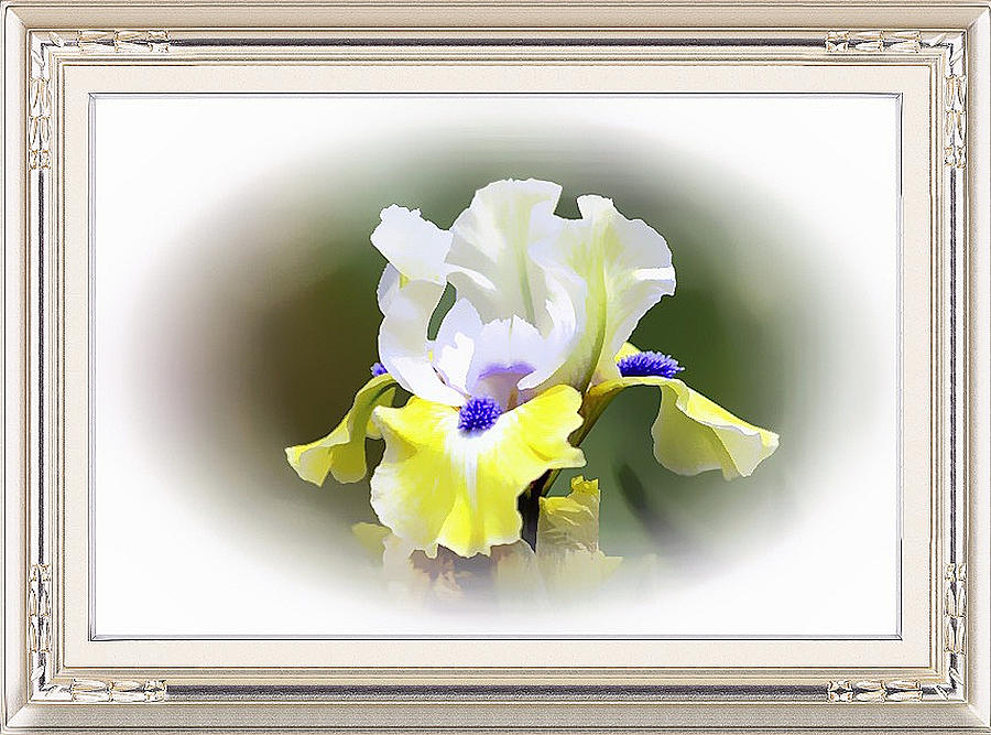 Exquisite Iris Framed Metal Print by Clive Littin