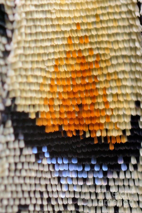 Macro Photograph - Extreme Macro Of Swallowtail Butterfly by D. Kucharski K. Kucharska