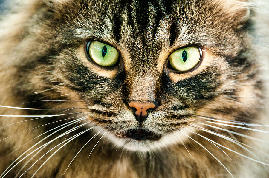 Eye Cat-ching Photograph