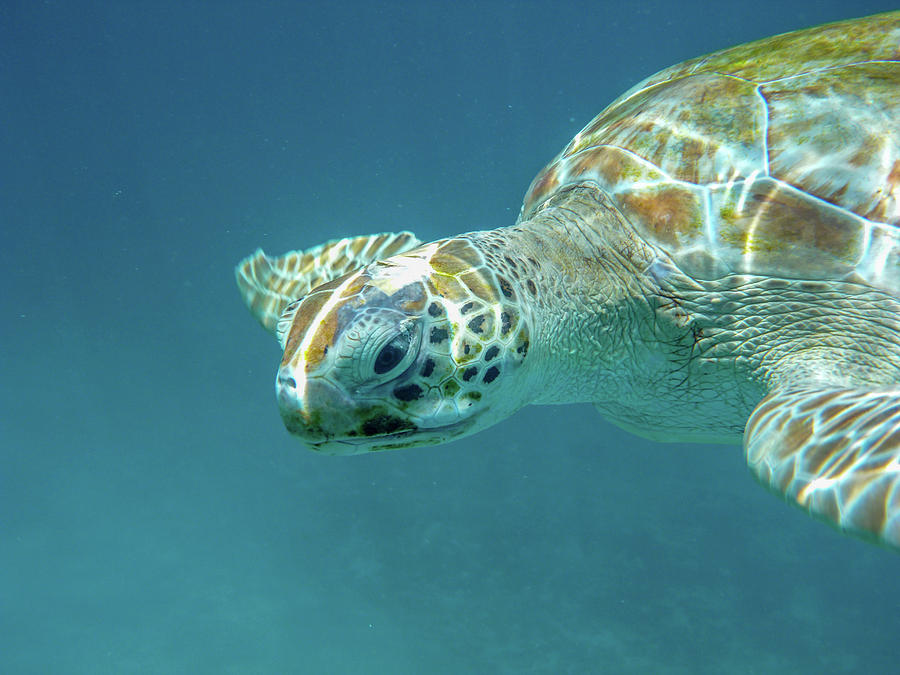 Eye Contact with a Turtle by Mark Hunter