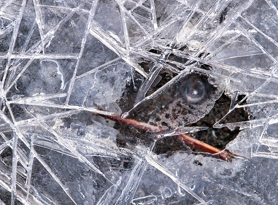 Ice Photograph - Eye of the Ice by Christopher Behrend