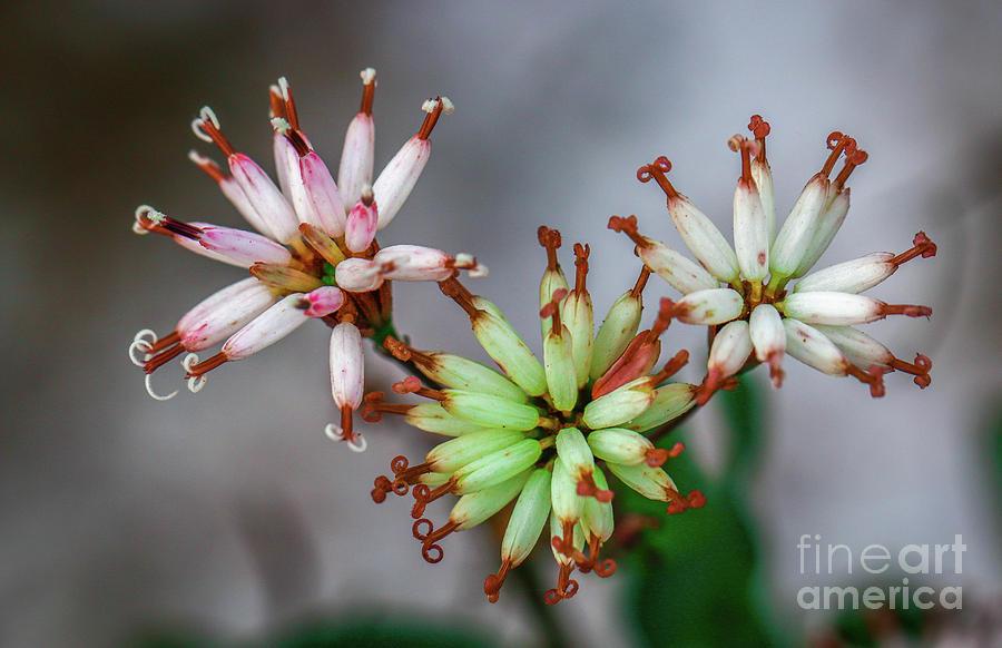 Eye-Popping Wildflower Trio by Tom Claud