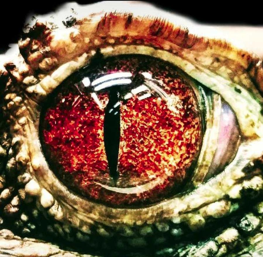 Eye Photograph - Eye See You by Photo Crane