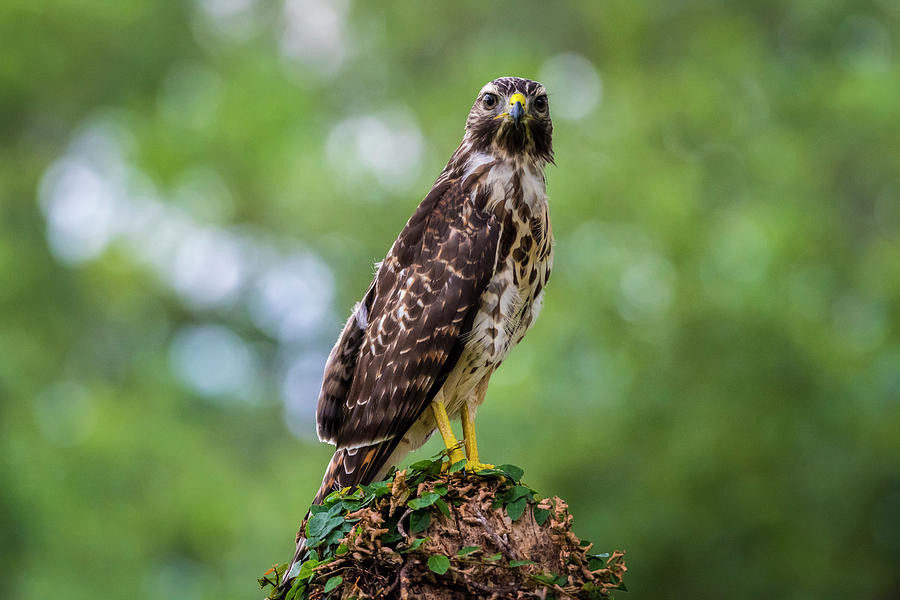 Eyes on You by David Morefield
