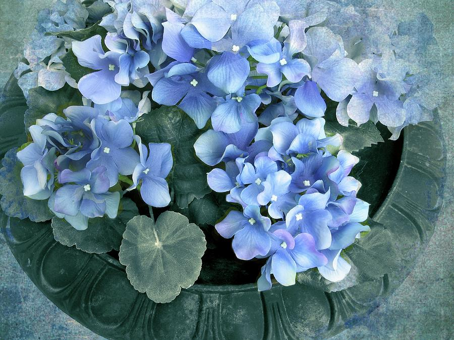 Flowers Photograph - Hydrangea In Blue by Jessica Jenney