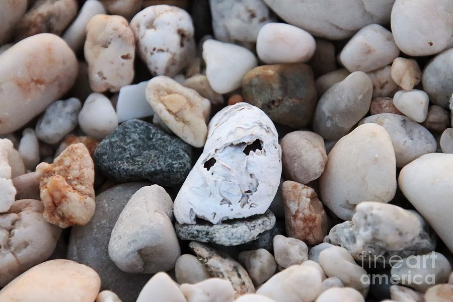 Face In The Shell by Karen Silvestri