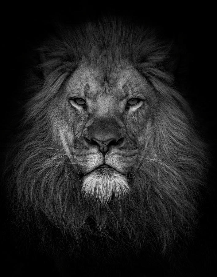 Face of a King  by Kelley Parker