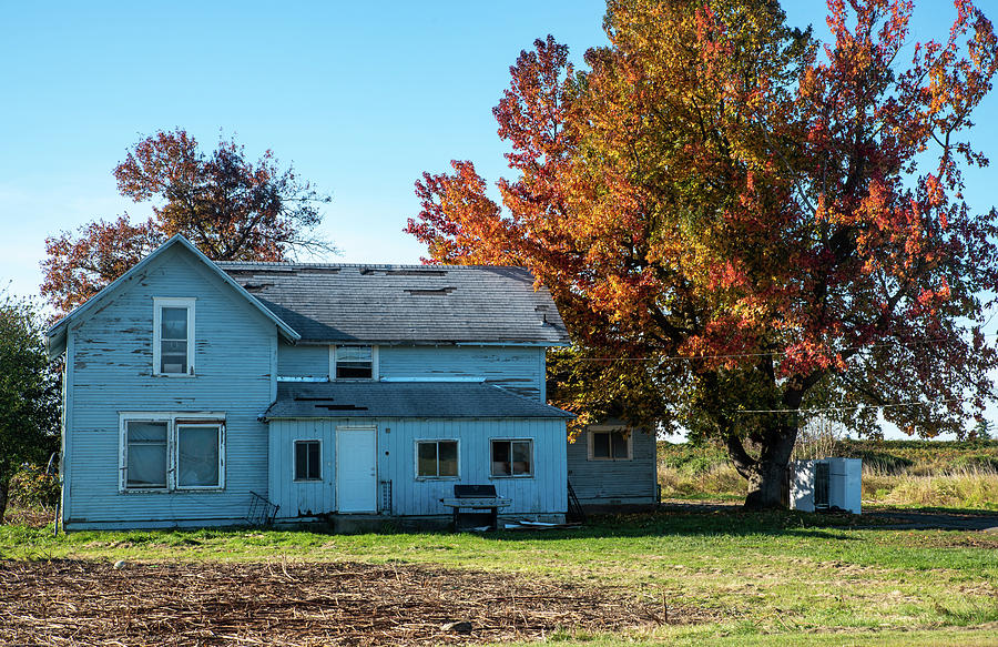 Faded Blue House and Autumn Maple by Tom Cochran