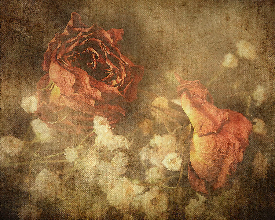 Faded Rose by Keith Smith