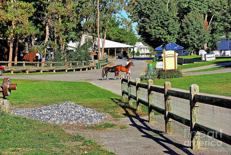 Horses Photograph - Fairgrounds In Rhinebeck New York by Zal Latzkovich