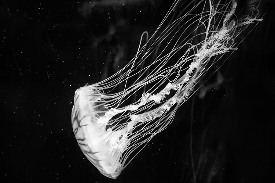 Jellyfish Photograph - Fairy by Alina Avanesian