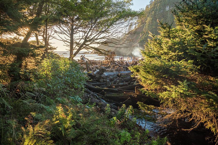 Fairy Tale Trail by Kristopher Schoenleber