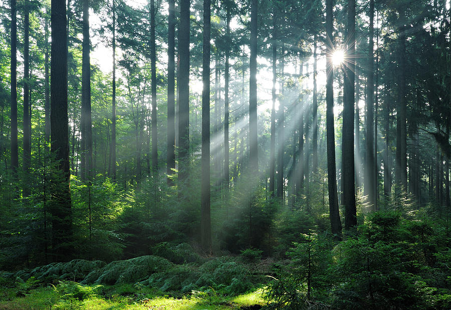 Outdoors Photograph - Fairytale Forest - Sunbeams In Natural by Avtg