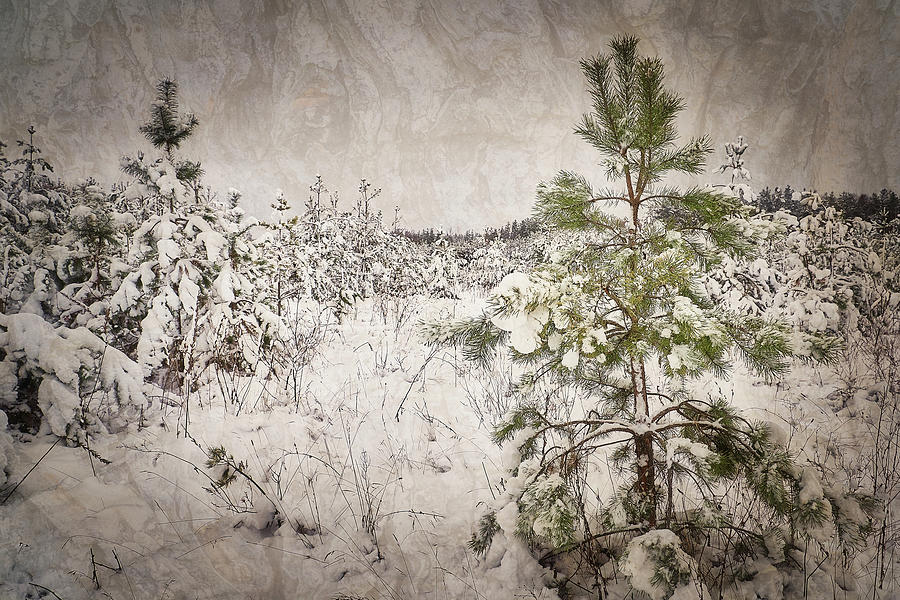 Fairytale of winter forest. Shchymel, 2018. by Andriy Maykovskyi