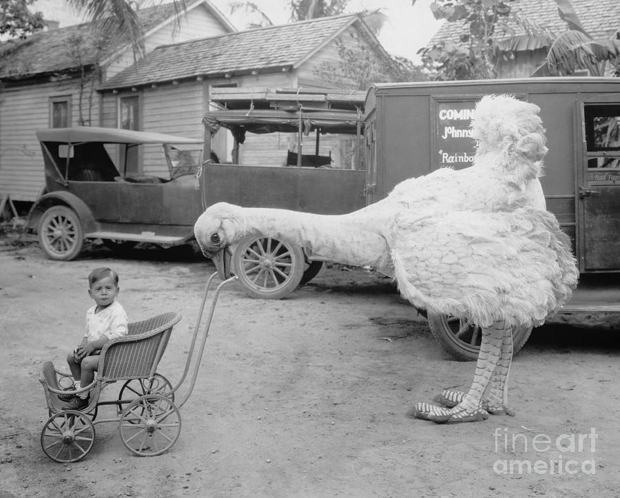 Bizarre Photograph - Fake Ostrich Pushing Boy In Stroller by Everett Collection