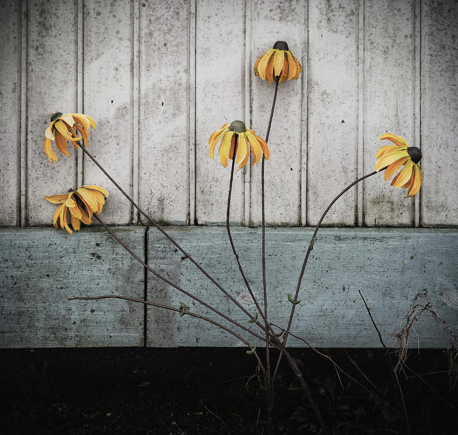 fake wilted flowers by Steve Stanger
