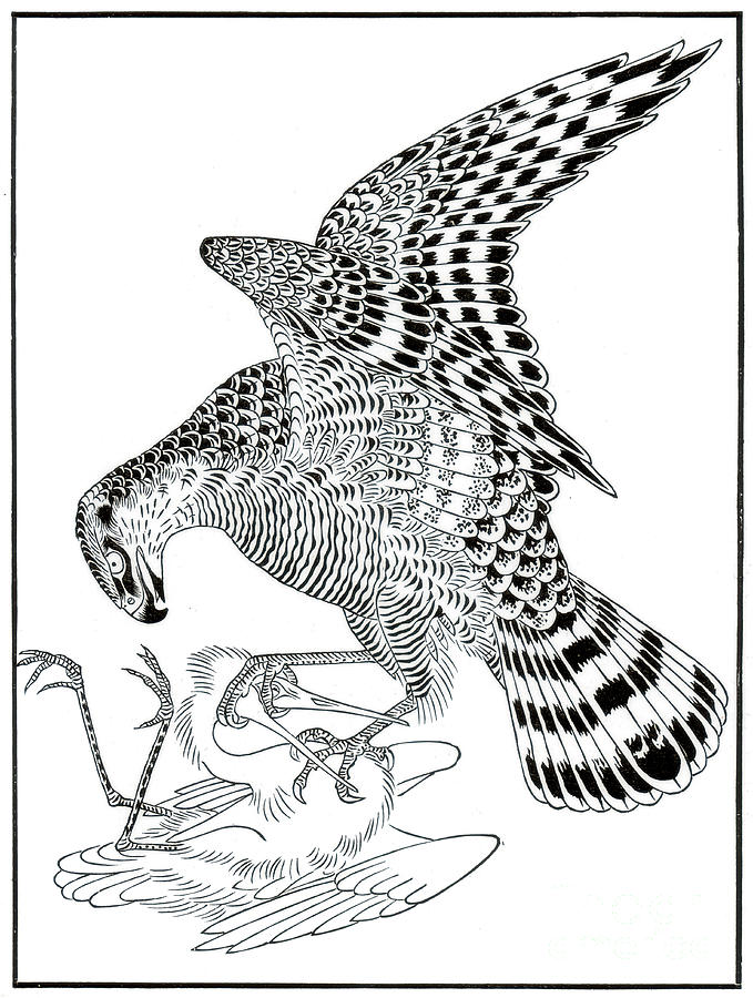 Falcon And Egret, 16th Century 1886 Drawing by Print Collector